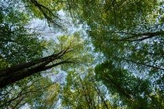 Vertikale Perspektive innerhalb eines dichten Waldes mit Stockbild