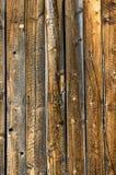 Vertikale verwittertes Abstellgleis der knorrigen Kiefer Stockfotografie