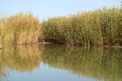 Vertikaler Aufbau der Bäume Bushers und Moutain, die im ruhigen See während des Sonnenuntergangs sich reflektieren stockbild