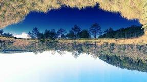 Vertikaler Aufbau der Bäume Bushers und Moutain, die im ruhigen See während des Sonnenuntergangs sich reflektieren Stockfotografie