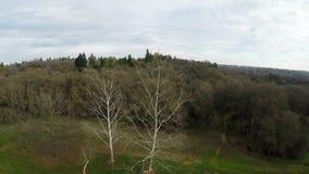 Vertikaler Aufstieg des Brummenfluges über Bäumen im Park stock footage