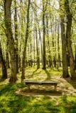 Vertikaler Baum Grove mit leerer Bank lizenzfreie stockfotos