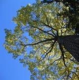 Vertikaler Baumauszug Stockfotos