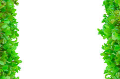 Vertikaler Blumen-Rahmen Stockbilder