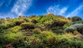 Vertikaler Garten Stockbild