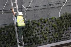 Vertikaler Garten Stockfoto