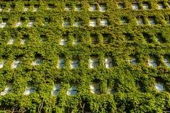 Vertikaler Garten auf Wand Lizenzfreies Stockbild