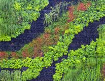 Vertikaler Garten, grüne Wand in Breslau, Polen stockbild