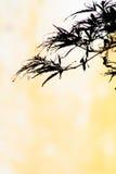 Vertikaler japanischer Ahornblatt-Hintergrund mit Kopien-Raum Stockbilder