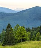 Vertikales Bild des schönen grünen Waldes und der blauen Berge C Stockbild
