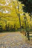 Vertikales Bild von Herbstbäumen und von gefallenen Blättern stockfotografie