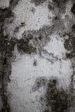 Vertikales Detail der alten Kolonialwand in Asien mit mit Schwarzem Stockbilder