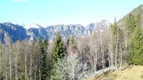 Vertikales Fliegen über den Bäumen, zum der Alpen zu sehen stock footage