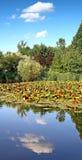 Vertikales Foto der Bäume und des Wassers Lizenzfreie Stockfotografie