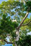 Vertikales Foto eines alten Baums in einem Wald lizenzfreies stockbild