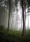 Vertikales Foto eines grünen Waldes mit Nebel Stockfotografie