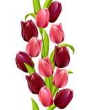 Vertikales nahtloses Muster mit Tulpen Stockfotos