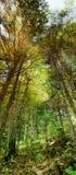 Vertikales Panorama des starken Waldes Stockfotos