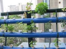Vertikales Pflanzen des Gemüses in der Stadt Stockbilder