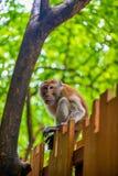 Vertikales Porträt eines Affen auf dem Zaun Stockbilder