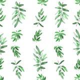 Vertikales unterschiedliches Grün des nahtlosen Musters verlässt auf einem weißen Hintergrund watercolor Lizenzfreies Stockbild