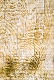 Vertikalschnitt des Holzes Stockfotografie
