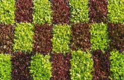 Vertikalt arbeta i trädgården för grönsak Royaltyfri Foto