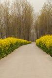 Vertikalt baner, väg för land för canolablommalantgård Fotografering för Bildbyråer