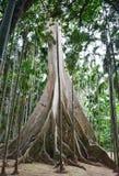 Vertikalt foto av en gammal tree i en grön skog fotografering för bildbyråer