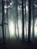 Vertikalt foto av en skog på morgonen arkivbilder