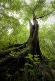 Vertikalt foto av ett träd med grön mossa i en grön skog i sommar Arkivbilder