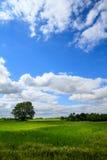 Vertikalt grässlättfält Fotografering för Bildbyråer