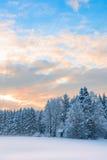 Vertikalt landskap fryst skog med snö-täckte mycket lilla trächu royaltyfri bild