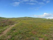 Vertoning van de de lente de Wilde Bloem stock fotografie