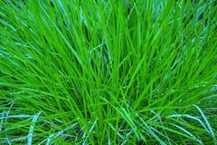verts Image stock
