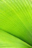 Verts convergents Image stock
