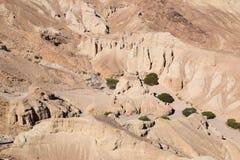 Verts dans le désert montagneux photo stock