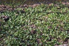 Verts dans le jardin photo stock