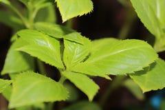 Verts de ressort Photo libre de droits