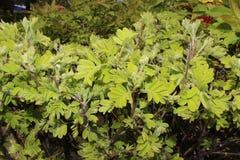 Verts de ressort Image stock