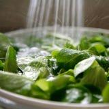 Verts frais Photos libres de droits