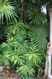 Verts tropicaux Images libres de droits