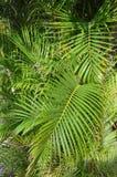 Verts tropicaux Images stock