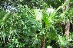 Verts tropicaux Photo libre de droits