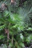 Verts tropicaux Image libre de droits