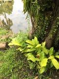 Verts verts Image libre de droits