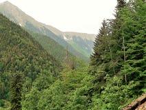 Verts vifs lumineux des arbres et de la végétation dans les montagnes de Caucase avec les crêtes brumeuses sur les fusions d'hori Photos libres de droits