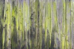 Veru old mossy green vertical planks on side or door of farmer`s barn. Veru old mossy green grungy cracked vertical planks on side or door of farmer`s barn Royalty Free Stock Photos