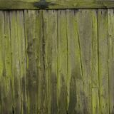 Veru old mossy green vertical planks on side or door of farmer`s barn. Veru old mossy green grungy cracked vertical planks on side or door of farmer`s barn Royalty Free Stock Photography