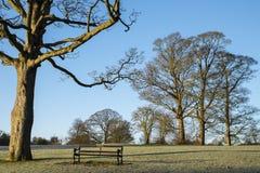 Verulamium park w St Albans obraz royalty free